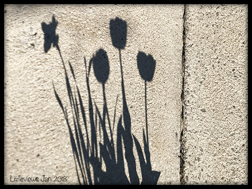 Learn how to take photos of shadows